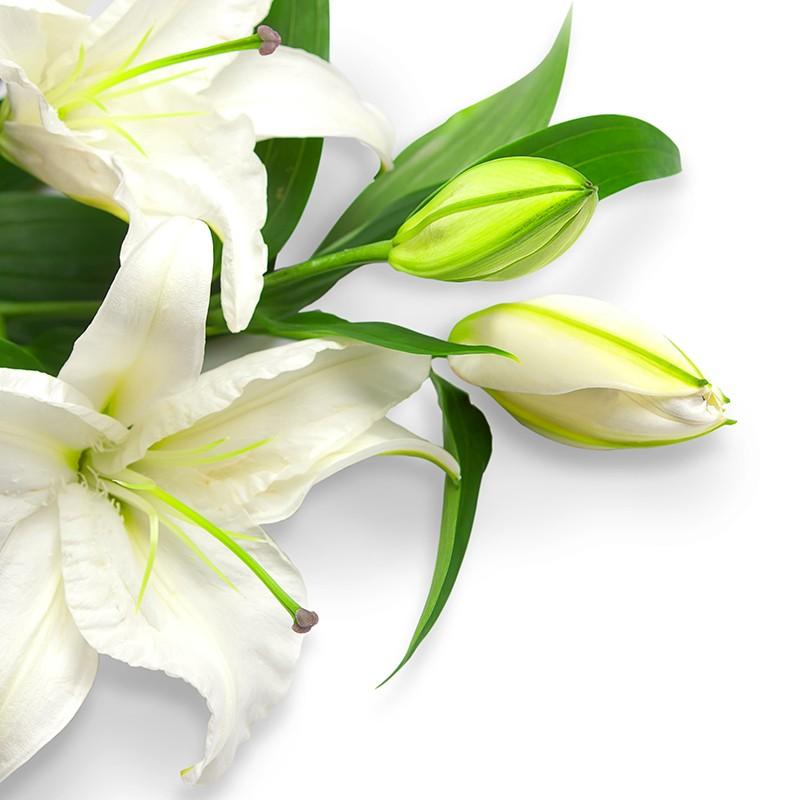 Букет из 9 белых лилий